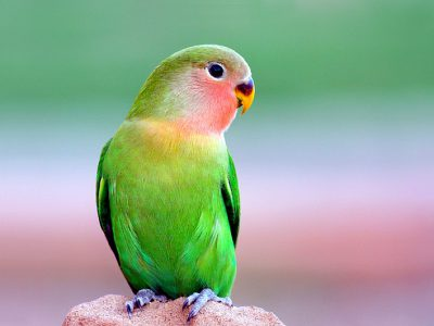 beautiful-parrot
